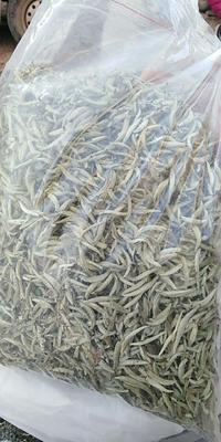 云南省普洱市墨江哈尼族自治县大叶种茶 一级 袋装