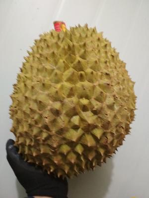湖南省永州市零陵区泰国金枕榴莲 4 - 5公斤 90%以上
