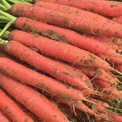 陕西省渭南市大荔县红皮萝卜 混装通货