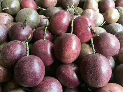 广西壮族自治区北海市合浦县紫红色百香果 统货