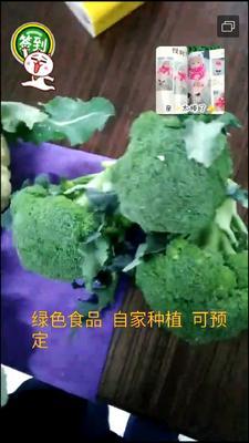 湖北省武汉市武昌区耐寒优秀西兰花 0.8~1.2斤 10~15cm