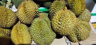 广西壮族自治区崇左市凭祥市金枕头榴莲 5公斤以上 80 - 90%以上
