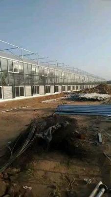 山东省潍坊市青州市文洛式温室大棚