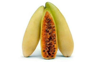 香蕉味百香果苗