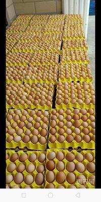 广东省茂名市化州市土鸡蛋 食用 箱装