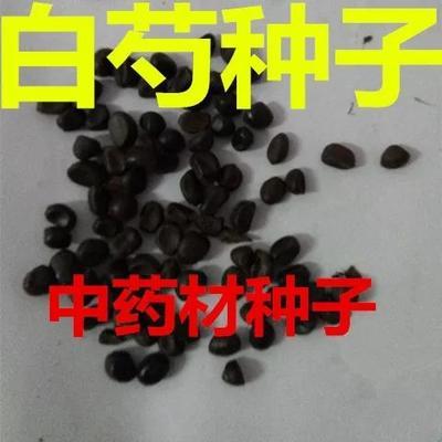 江苏省宿迁市沭阳县多花芍药 0.5米以下 2cm以下