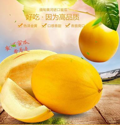 广东省潮州市湘桥区金凤凰哈密瓜 2斤以上