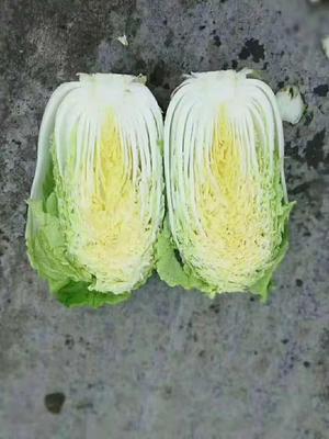 山东省潍坊市青州市菊锦春白菜 3~6斤 净菜