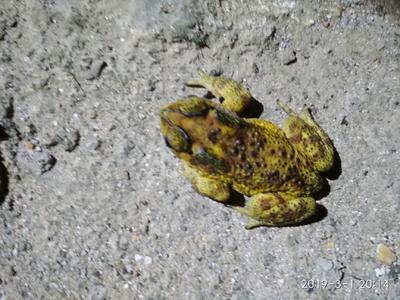 广西壮族自治区玉林市北流市青蛙