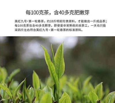 广东省清远市英德市野生绿茶 特级 罐装