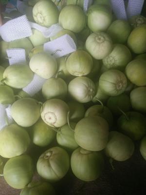 山东省青岛市莱西市甜宝 0.3斤以上