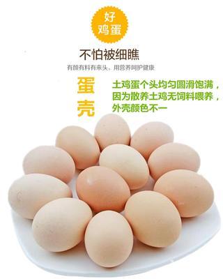湖北省黄冈市黄州区土鸡蛋 食用 箱装