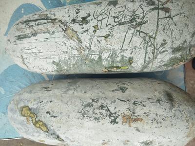 云南省普洱市宁洱哈尼族彝族自治县白皮冬瓜 2~6斤 地冬瓜