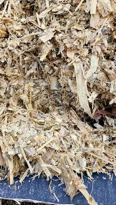 内蒙古自治区赤峰市巴林左旗全株玉米青贮