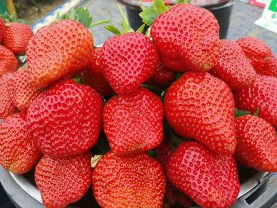 北京昌平区红颜草莓 20克以上