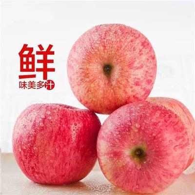广东省揭阳市揭西县洛川苹果 75mm以上 表光 膜袋