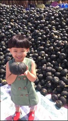 陕西省西安市雁塔区贝贝南瓜 1~2斤