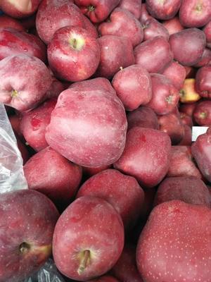 甘肃省陇南市礼县花牛苹果 75mm以上 片红 光果