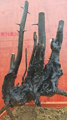 广西壮族自治区桂林市永福县造型金弹子