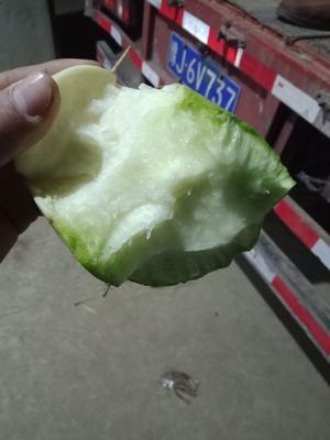 河南省开封市祥符区青皮绿萝卜 1~1.5斤