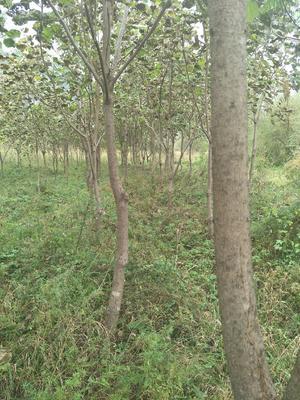 这是一张关于有林地 转包 10~20年 100~500亩 的产品图片