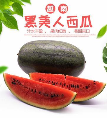 广东省潮州市湘桥区黑美人西瓜 6斤打底 9成熟 1茬 有籽