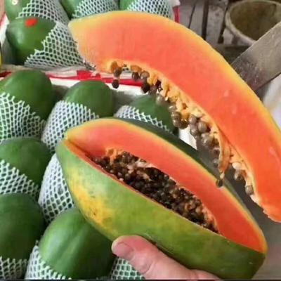 海南省海口市琼山区红心木瓜 1.5 - 2斤