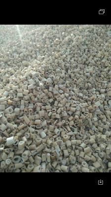 甘肃省酒泉市瓜州县(原安西县)干芦苇  芦苇片大量
