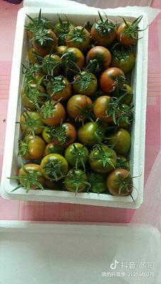 辽宁省大连市普兰店市草莓柿子 2 - 3两以上