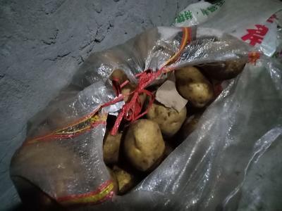 青海省海北藏族自治州门源回族自治县黄心土豆 4两以上