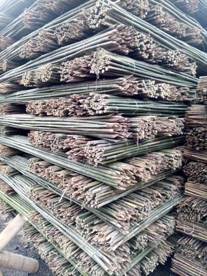 湖南省怀化市鹤城区菜架竹 3米白竹 水竹