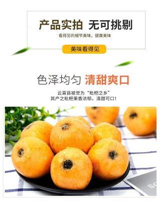 福建省漳州市漳浦县云霄枇杷  1两以上 三斤
