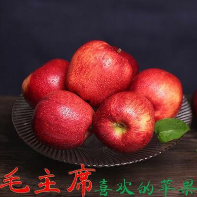广东省潮州市湘桥区花牛苹果 70mm以上 全红 纸+膜袋