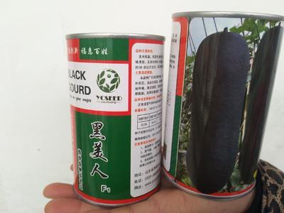 山东省济南市历城区冬瓜种子  ≥85% 黑皮冬瓜