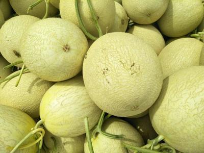 甘肃省武威市民勤县民勤蜜瓜 0.3斤以上
