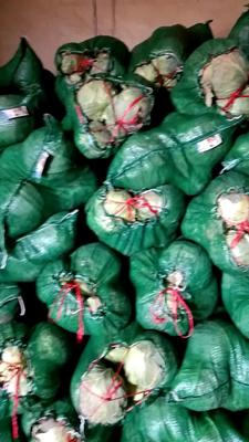 河北省保定市南市区绿甘蓝 3.0~3.5斤