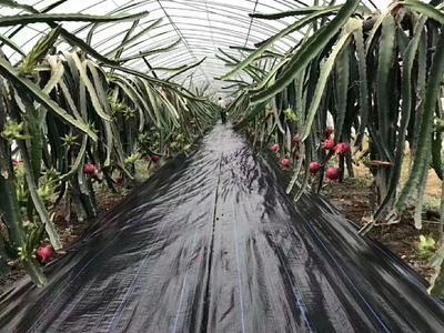 山东省德州市陵城区地布  除草园艺地布抑草布