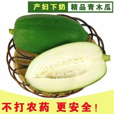 广东省潮州市湘桥区青木瓜 1.5 - 2斤