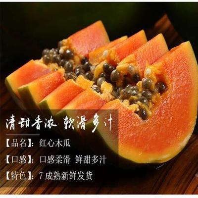 广东省潮州市湘桥区红心木瓜 2 - 2.5斤