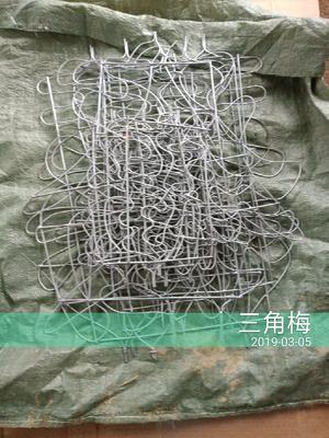 广西壮族自治区桂林市平乐县福禄桐盆栽