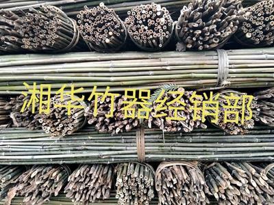 湖南省怀化市鹤城区菜架竹