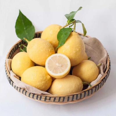四川省资阳市安岳县黄柠檬 2.7 - 3.2两