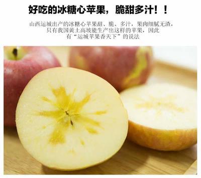 广东省潮州市湘桥区冰糖心苹果 85mm以上 全红 纸+膜袋