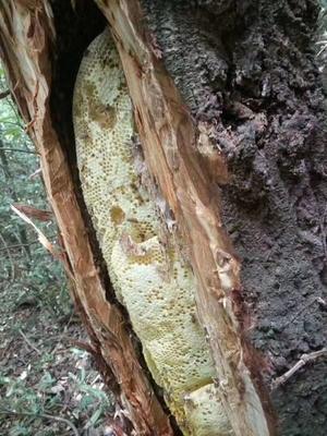 广西壮族自治区来宾市金秀瑶族自治县野生蜂蜜 散装 2年以上 95%以上