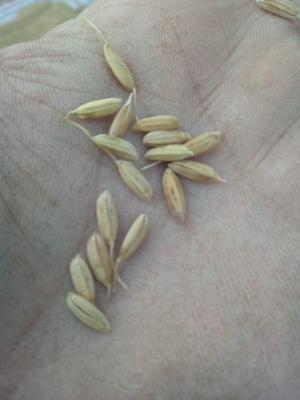 吉林省吉林市舒兰市稻花香二号大米 一等品 一季稻 粳米