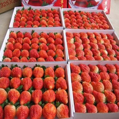 这是一张关于鬼怒甘草莓 20克以下 的产品图片