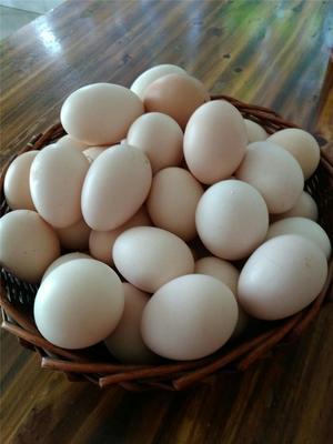 重庆合川区土鸡蛋 食用 散装
