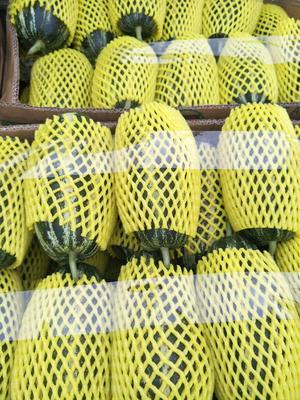 河北省沧州市青县博洋9号甜瓜 0.5斤以上