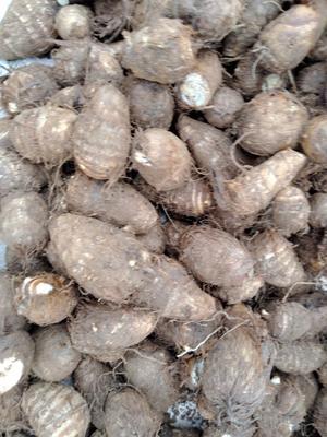 山东省潍坊市安丘市毛芋头 通货