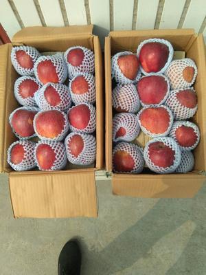 河南省漯河市舞阳县花牛苹果 70mm以上 统货 光果
